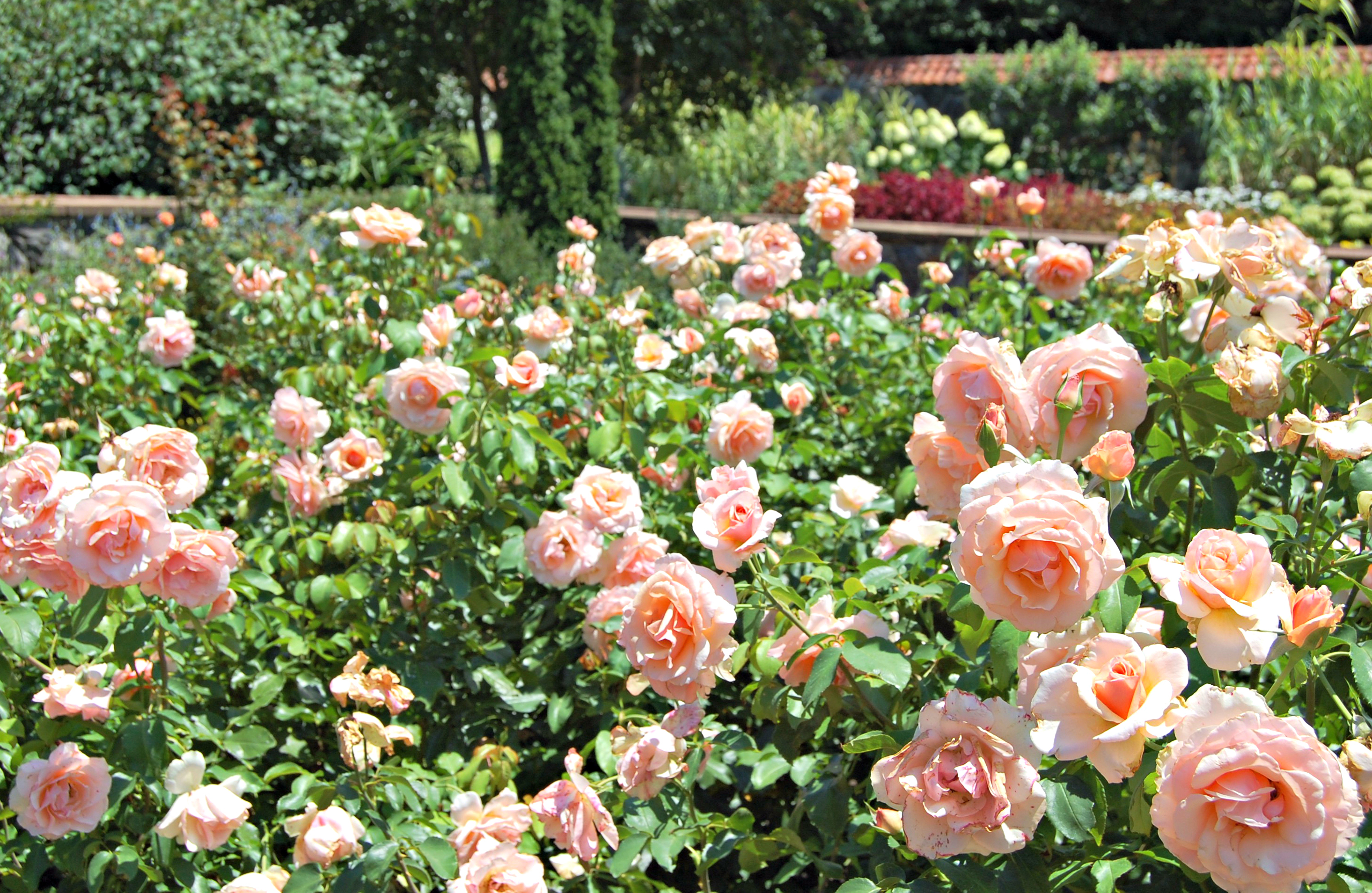 Gardens of the Biltmore Estate | Rosé and Reservations