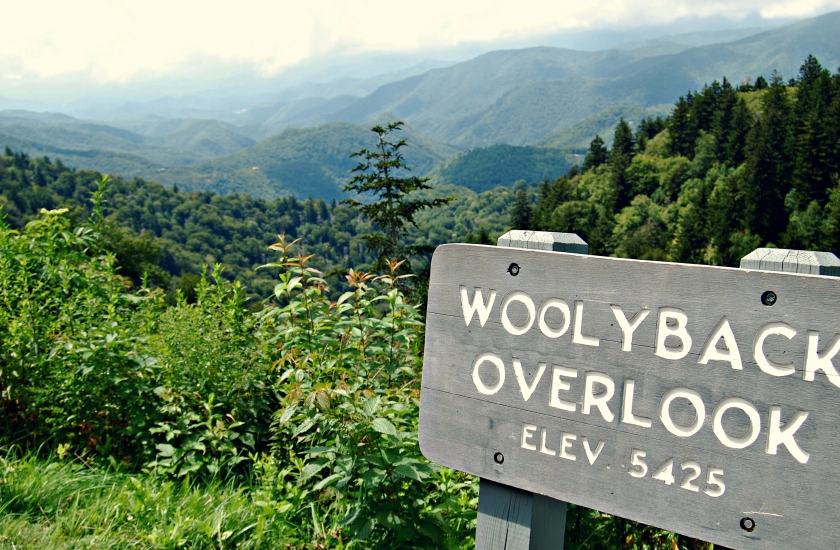 Woolyback Overlook, Blue Ridge Parkway | Rosé and Reservations