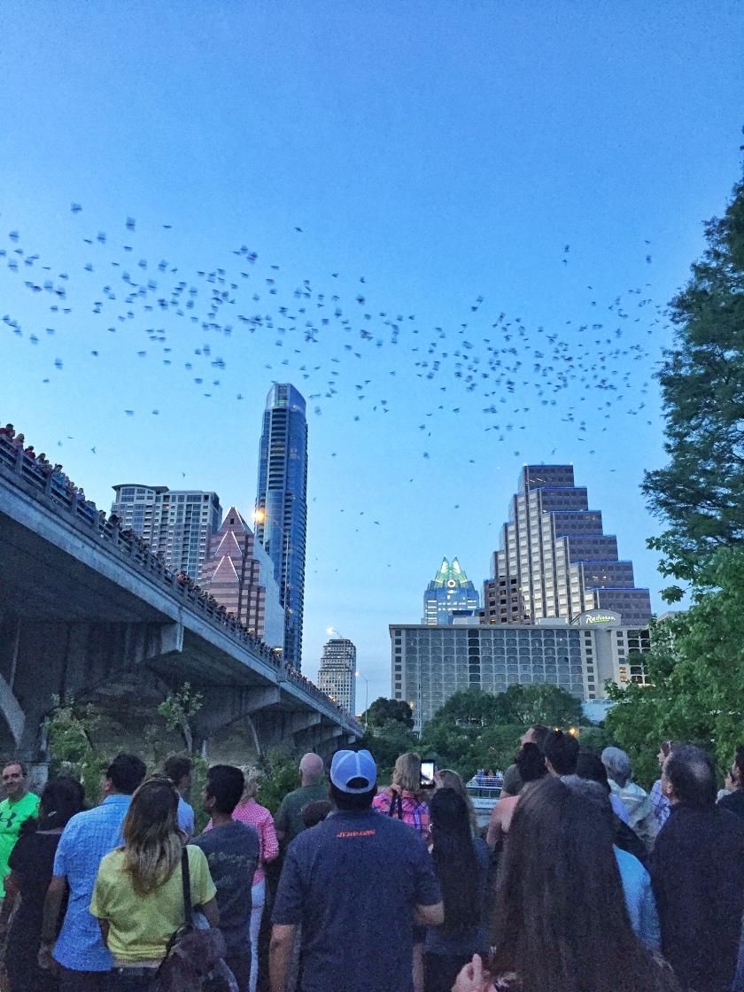 Bat Bridge at Austin, TX | Rosé and Reservations